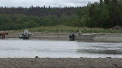 Brown Bear Walking Summer Boats - stock footage