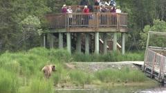 Recreation Katmai National Park Summer Watching Wildlife - stock footage