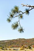 Pine on mountain plateau ai-petri in crimea Stock Photos