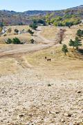 Mountain plateau ai-petri in crimea Stock Photos