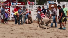 boy riding sheep in kid rodeo - stock footage