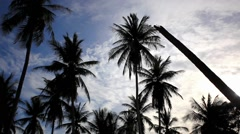 Coconut palm trees and sky. HD. 1920x1080 Stock Footage