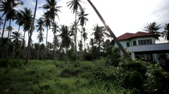 Coconut trees and house in jungle forest at the road. 1920x1080. HD Stock Footage