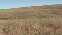 Prairie Custer State Park Fall Pan Stock Footage