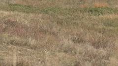 Prairie Custer State Park Fall Zoom Out Stock Footage