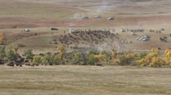 Land Use Custer State Park Fall Roundup Bison Stampede - stock footage