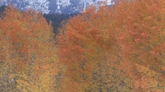 Mountain Grand Teton National Park Fall Fall Colors Aspen Zoom Out - stock footage