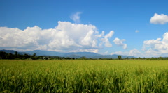 Rice paddies in rural northern Thai Stock Footage