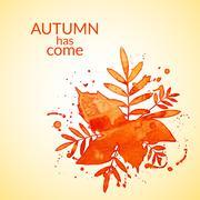 Autumn watercolor rowan leaves and spray, vector illustration Stock Illustration