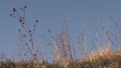 Big Bluestem Fall Prairie Ground Level Stock Footage