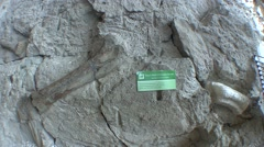 Other Reptiles Dinosaur National Monument Spring Dinosaur Fossils Bone Tilt Up - stock footage