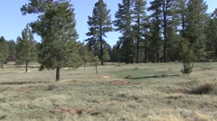 Utah Prairie Dog Pair Spring Habitat Stock Footage