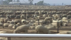 Land Use  Spring Sheep Feedlot Domestic Tracking Stock Footage