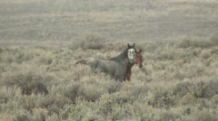 Horse Summer Wild Feral - stock footage