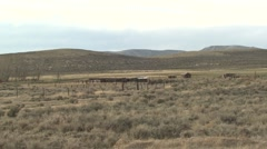 History Red Desert Summer Ranching - stock footage