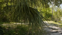 forest trail - stock footage