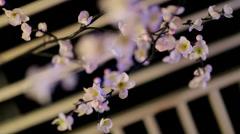 Sakura in the interior background Stock Footage