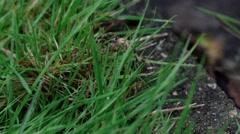 Garden Spider Climbing on Grass Stock Footage