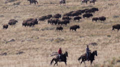 Cowboys buffalo roundup Stock Footage