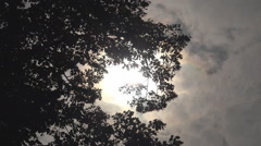 Beautiful sun silhouette among tree leaves tall arbor cloud pass summer day wood Stock Footage