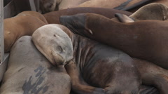 Young Sea Lions Sleeping Stock Footage