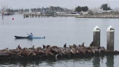 Wide Shot of Pier with Sea Lions & Kayaker Paddling Stock Footage