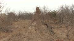 Termite Winter Colony Mound - stock footage
