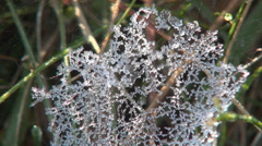 A frozen spider web in a cold morning. Winter season. Stock Footage