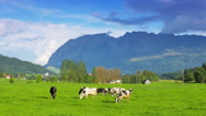 Stock Video Footage of Austrian idyllic landscape with cows in the meadow