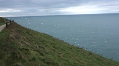 A big swarm of seagulls flying at the edge at the ocean, green hill foreground Stock Footage