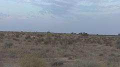 Gemsbok Adult Lone Standing Winter Kalahari Zoom In Stock Footage