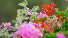 Colorful flowers trembling in the wind Stock Footage