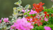 Stock Video Footage of Colorful flowers trembling in the wind