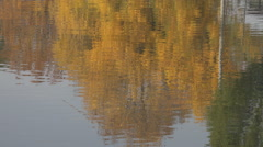 Beautiful water reflection tree branch autumn season colorful arbor crown lake  Stock Footage