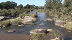 River & Stream Kruger National Park Winter - stock footage
