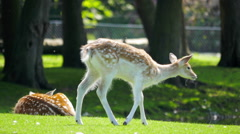 Cute young deer in greenery Stock Footage