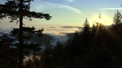 Forest Olympic National Park Fall Dawn Ocean Fog Sun Flare - stock footage