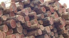 Land Use  Fall Logging Logs Forestry Harvest Stock Footage