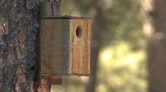 Hairy Woodpecker Adult Fall Nest Box Stock Footage