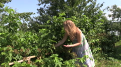 Pregnant woman gather and eat berry from bush in garden Stock Footage