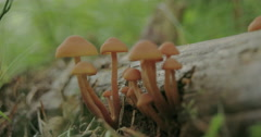 Small tiny white mushrooms growing on the tree trunk fs700 4k Stock Footage