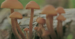 Closer view of the tiny white mushrooms  fs700 4k Stock Footage
