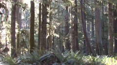 Forest Olympic National Park Fall Rain Forest Pacific Northwest Pan Stock Footage