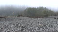 Stock Video Footage of Elk Bull Pair Fall Roosevelt Gravel Bar River