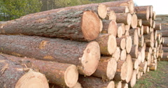 Heaps of logs from the cut spruce trees fs700 4k Stock Footage