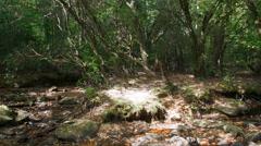 Dappled light through trees - stock footage
