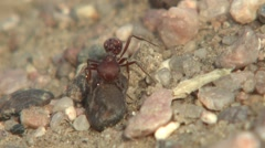 Ants Summer Slow Motion Stock Footage