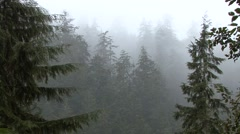 Stock Video Footage of Forest  Fall Rain Raining Mist
