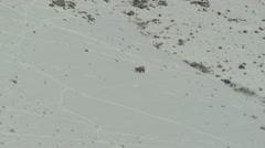 Bighorn Sheep Ram Adult Lone Walking Winter Snow - stock footage