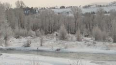Elk Herd Winter Riparian Area - stock footage